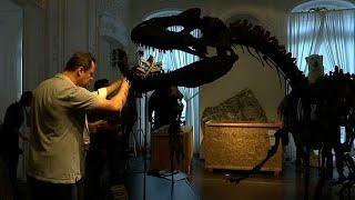 Скелеты динозавров уйдут с молотка