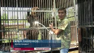 Обитатели Северского зоопарка спасаются от жары