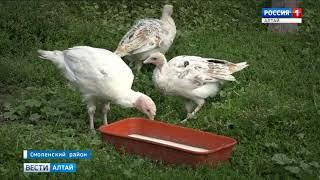 В Смоленском появилась новая достопримечательность - птичий двор