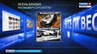 """""""Вести в сети"""" #267: в Ставрополе начался листопад"""
