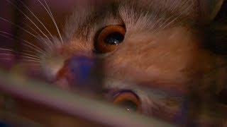 В Пензе несколько брошенных в квартире без еды и воды кошек нашли новые дома