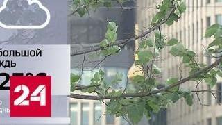 В столице снова объявлен желтый уровень погодной опасности - Россия 24