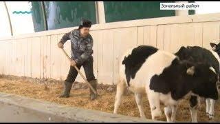 Лауреатов ежегодной Губернаторской премии среди работников молочной отрасли назовут в Алтайском крае