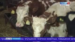 Смоленщина разрабатывает региональную молочную стратегию