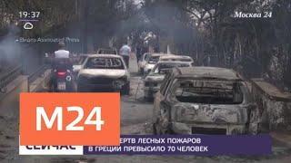 Число жертв лесных пожаров в Греции превысило 70 человек - Москва 24