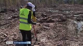 «Вологодские лесопромышленники» присоединились к акции «День посадки леса»