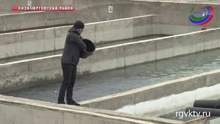 В Дагестане запустили инкубационные цеха для выращивания форели