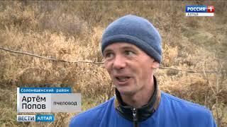 Алтайские пчёлы уходят на зимовку на месяц позже