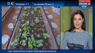 Минсельхоз разрабатывает программу «Цифровизация сельского хозяйства»