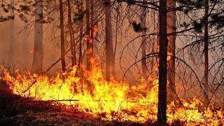 В Нижневартовском районе горит тайга
