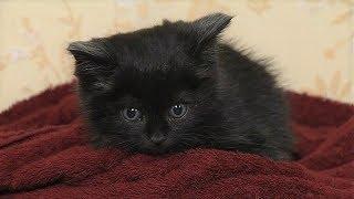 Самый «мимимишный» котёнок Ханты-Мансийска разыскивает хозяев