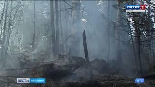 В МЧС напоминают, выжигание сухой травы запрещено