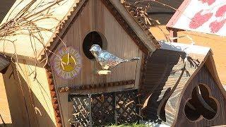В Саранске наградили победителей экологического конкурса «Птичий дом»