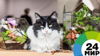 Главных котиков города представили в Санкт-Петербурге - МИР 24
