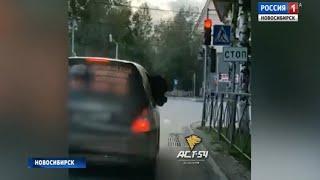 Новосибирец прокатил пони в салоне своего автомобиля