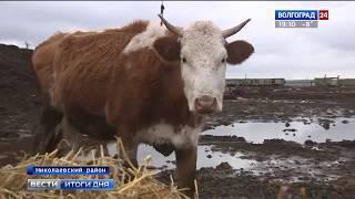 В Николаевском районе развивается переработка животноводческой продукции