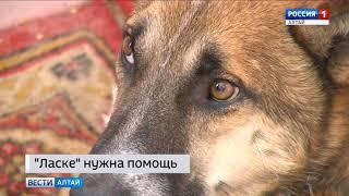 В барнаульском приюте «Ласка» бьют тревогу: нечем кормить собак