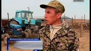 Между амурскими фермерами распределили 29 миллионов рублей грантов