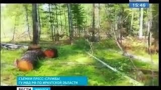 Вырубили лес больше чем на 3,5 млн рублей нелегальные заготовители в Боханском районе