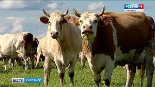 Смоленским владельцам ЛПХ помогут улучшить стадо