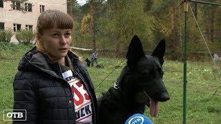 Собачья работа: в Екатеринбурге определят лучшего кинолога УрФО