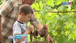 """""""Вести. Брянск"""" (эфир 08.08.2018 в 20:45)"""