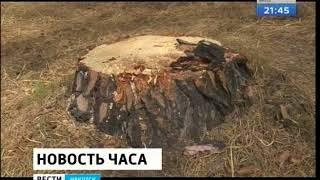 Незаконно вырубили лес почти на миллиард рублей в Казачинско Ленском районе
