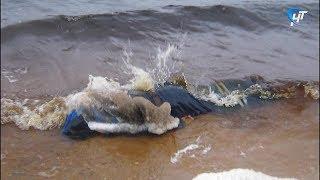 Найдено тело одного из трех рыбаков, пропавших в Хвойнинском районе