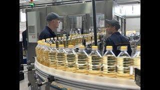 300 тонн подсолнечного масла в сутки будет производить новый цех в Самарской области