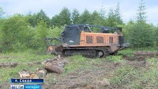 Механический лесоруб работает на Колыме и в Якутии