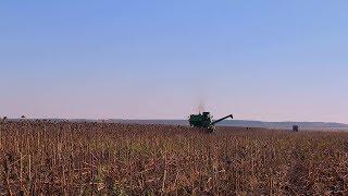 В Пензенской области убрано свыше 260 тыс. тонн подсолнечника