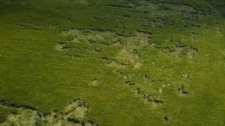 Под Первоуральском на полях ячменя появились таинственные геометрические фигуры