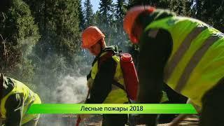ИКГ Лесные пожары 2018 #7
