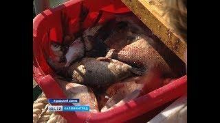 В Калининградской области подсчитывают рыбу
