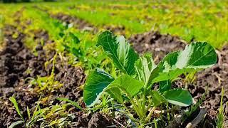 И в саду, и в огороде - 01.10.18 Особенности экологического земледелия