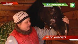Зоозащитники обвиняют предпринимателя в жестоком обращении с животными - ТНВ