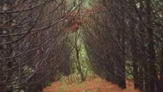 Контроль за вырубкой им переработкой леса усилят в ЕАО(РИА Биробиджан)