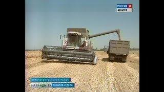 В Адыгее разгар уборки пшеницы