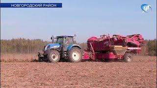 На полях Новгородской области в разгаре картофельная страда