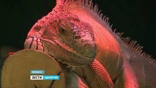 В Зоопарке Удмуртии даже самые хладнокровные обитатели начали создавать пары