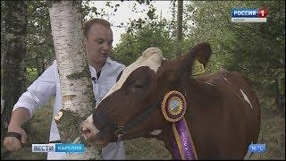 В Туксе прошёл традиционный молочный фестиваль