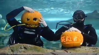 Хэллоуин под водой