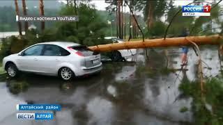 «Всё просто порушило!»: ураган на «Бирюзовой Катуни» сломал десятки деревьев
