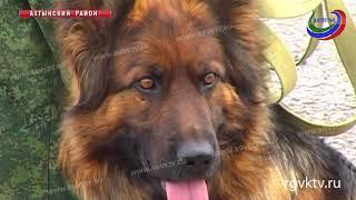 Задержать преступника, найти наркотики и боеприпасы. В Дагестане прошли соревнования служебных собак