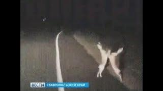 """""""Вести в сети"""". Выпуск #200"""