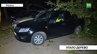 Четыре автомобиля пострадали в результате падения дерева на улице Короленко - ТНВ