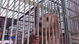 В уфимском вольере после зимней спячки проснулись медведи