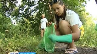 Неравнодушные калининградцы в разгар купального сезона взялись за уборку побережья
