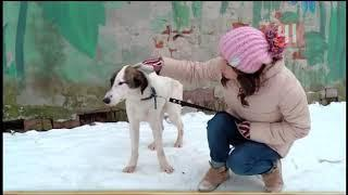 Приют для бездомных собак в Екатеринбурге