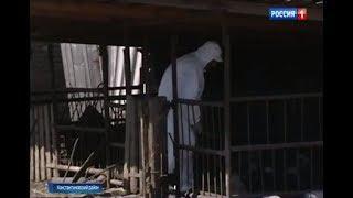 В станице Николаевской введен карантин из-за вспышки чумы свиней